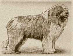 Storia for Cane da pastore della russia meridionale